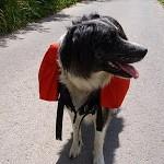 Gewöhnung an die Hundepacktasche