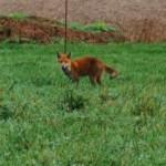 Mit dem Hund im Westerwald Tag 2