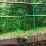 Mit dem Hund im Westerwald Tag 3
