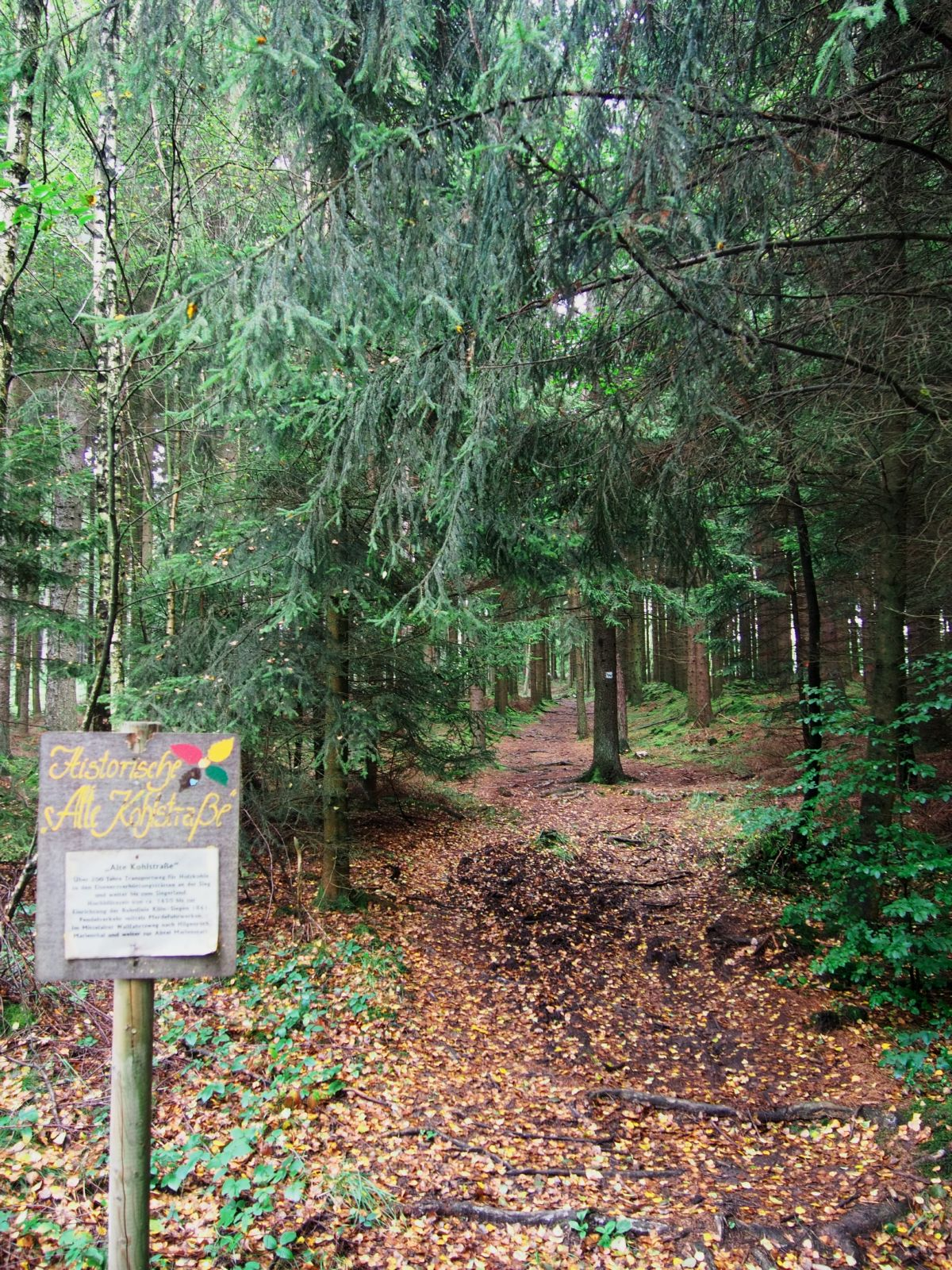Westerwald 45