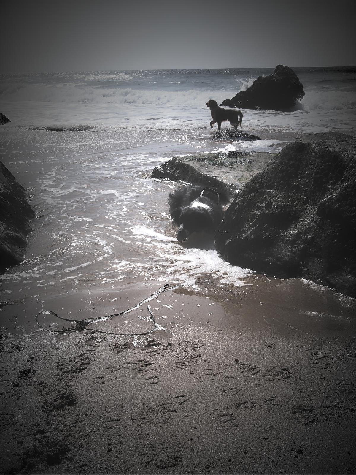 Nelly und der fremder Hund am Meer 01