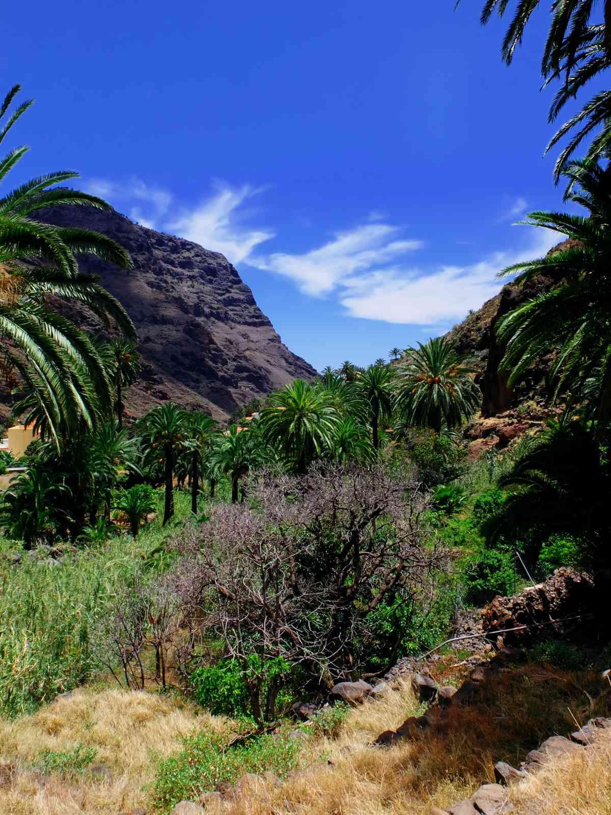 Der Wasserfall von El Guro - Üppige Vegetation