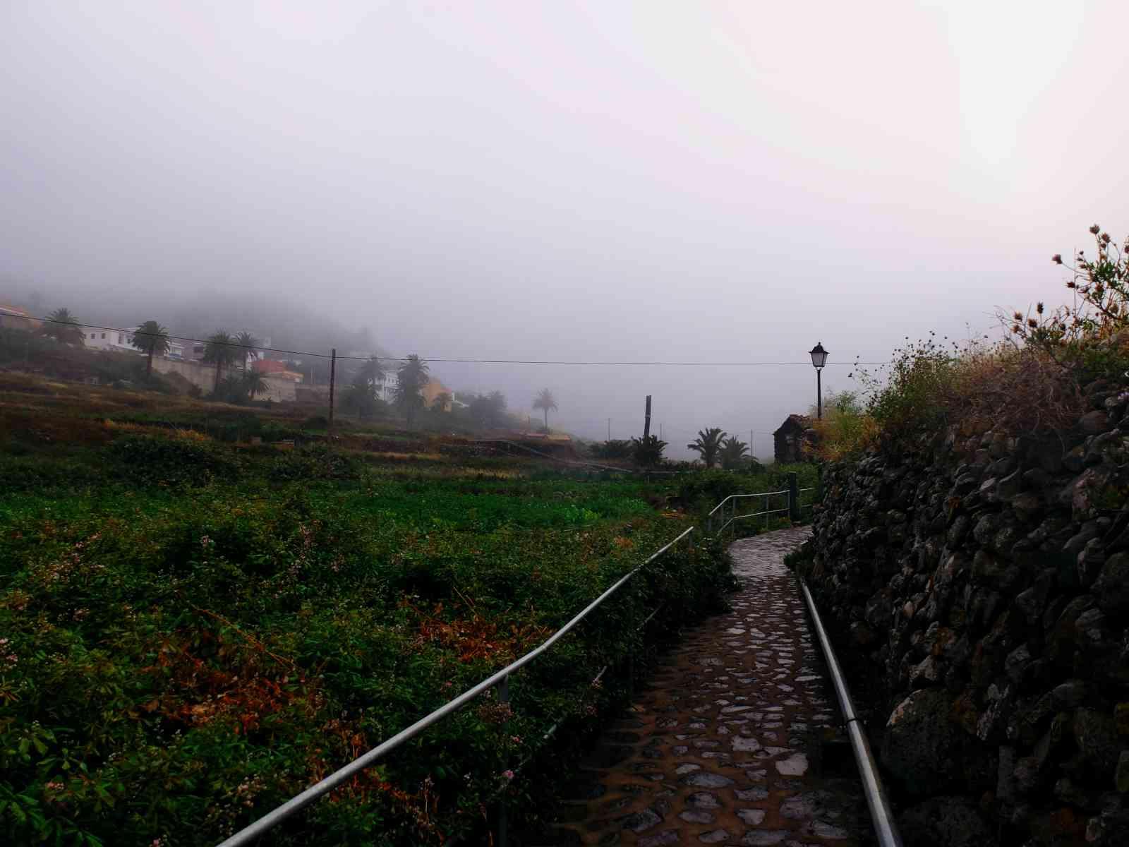In den Nebelwald - Arure