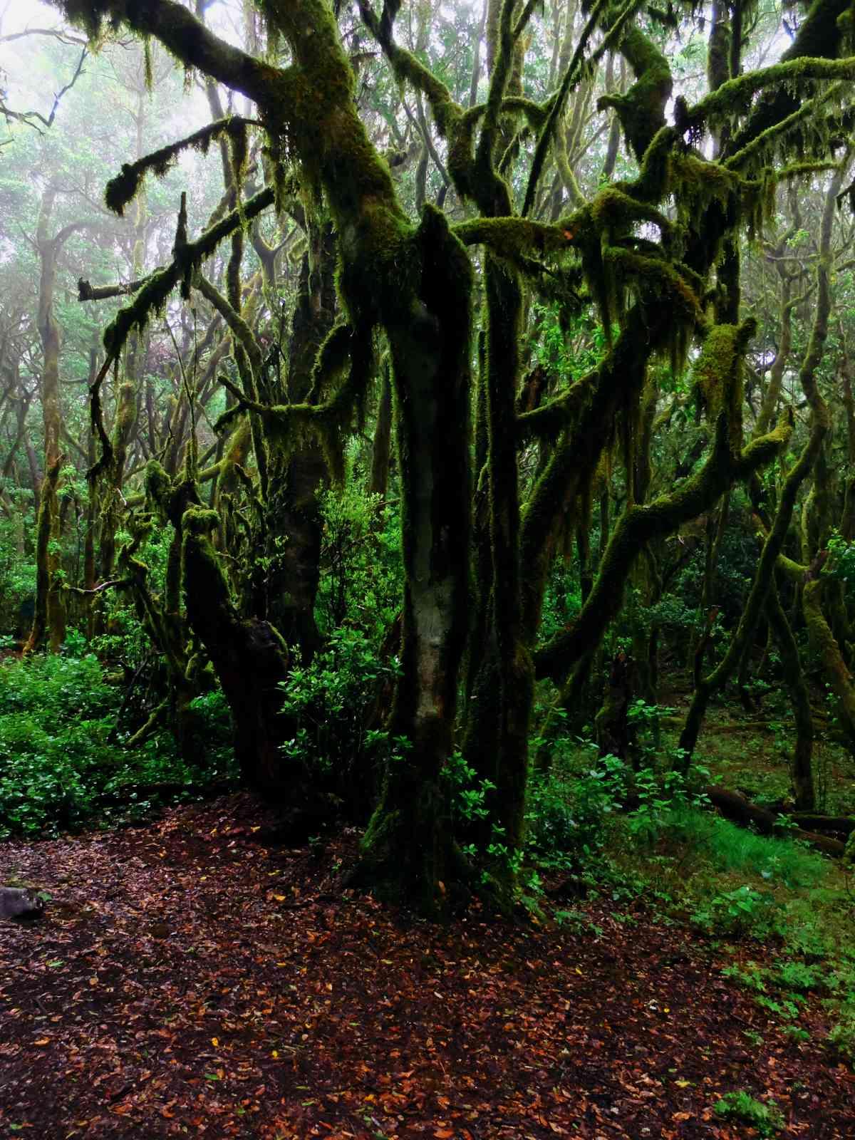 In den Nebelwald - Hexenwald