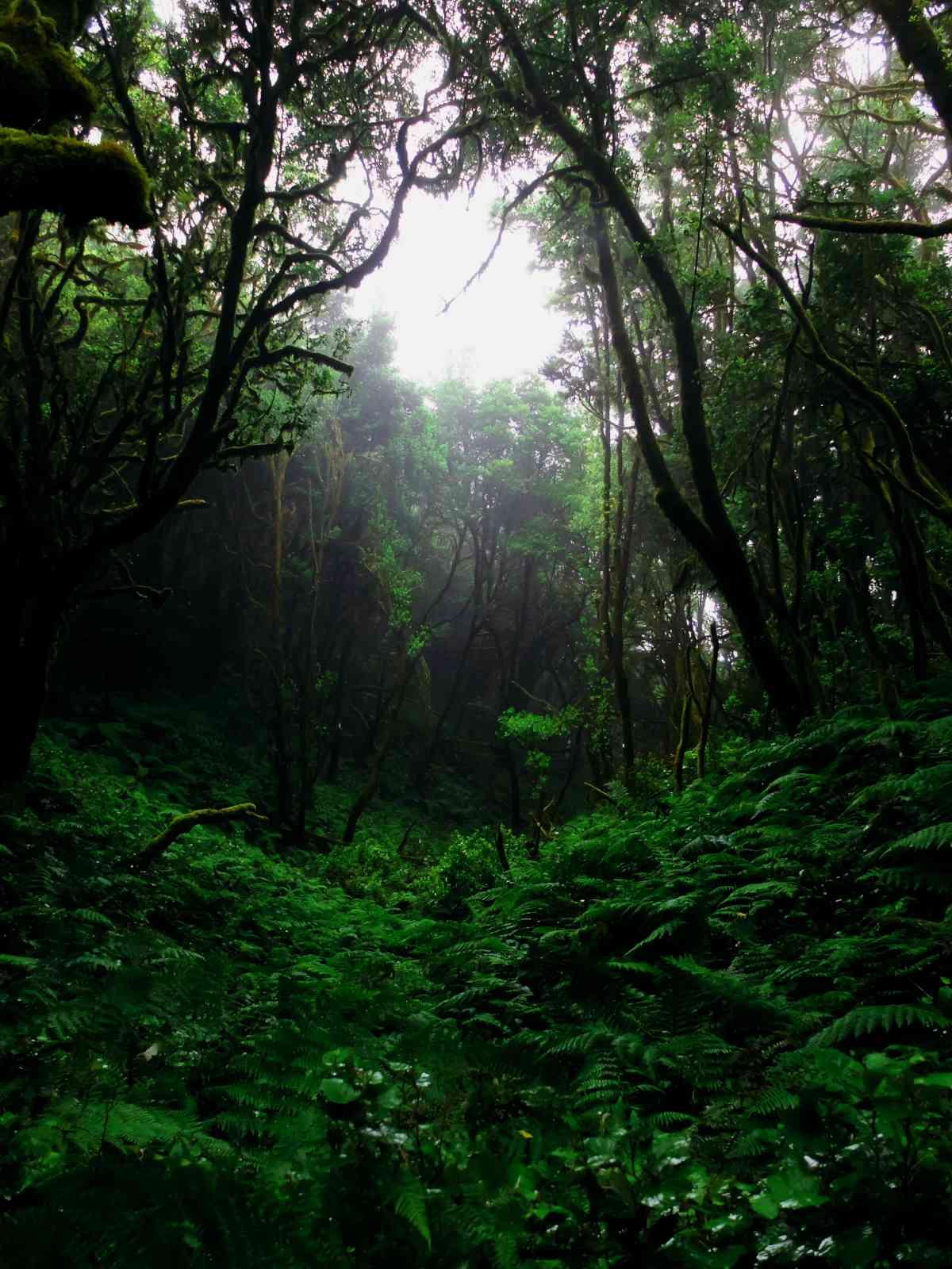 In den Nebelwald - Grüne Hölle