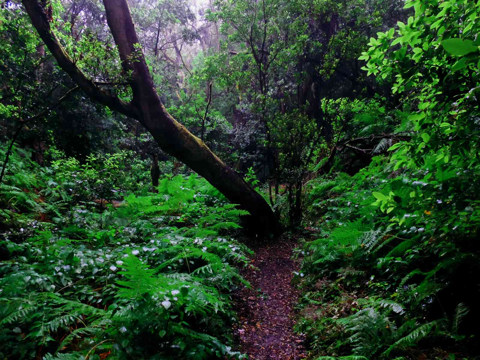 In den Nebelwald - Schmale Wege