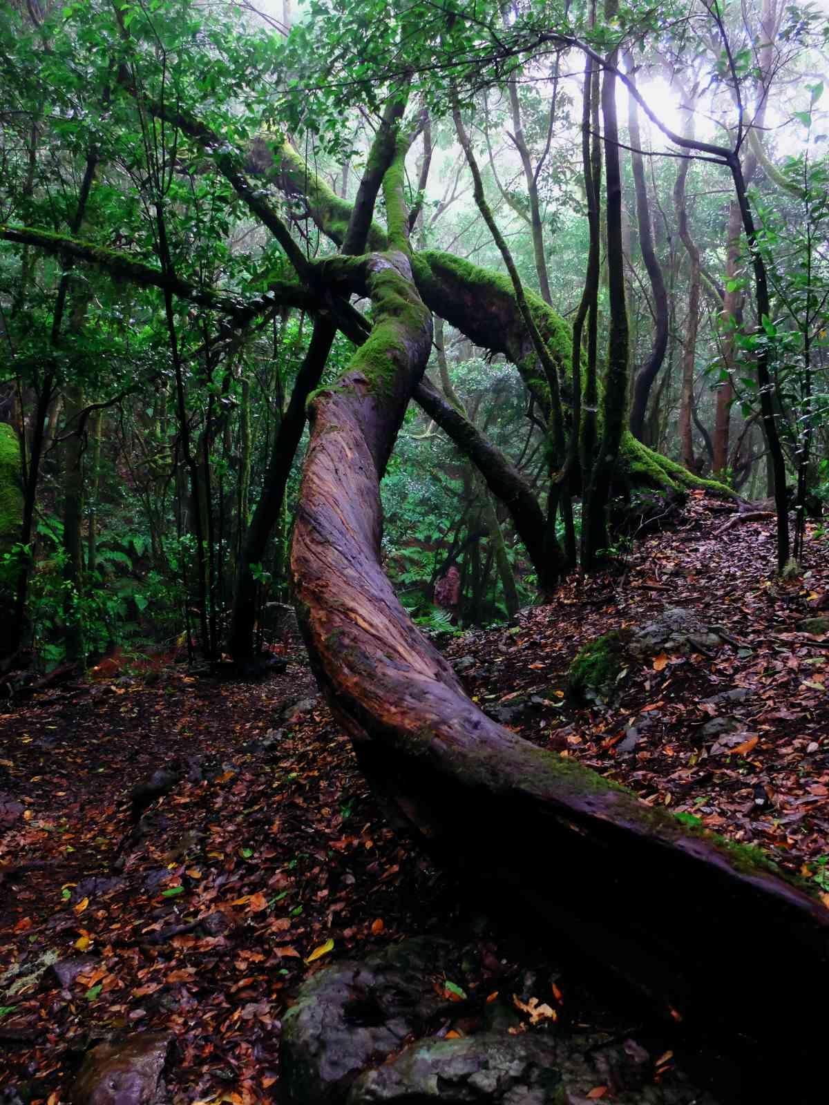 In den Nebelwald - Bizarre Ungetüme