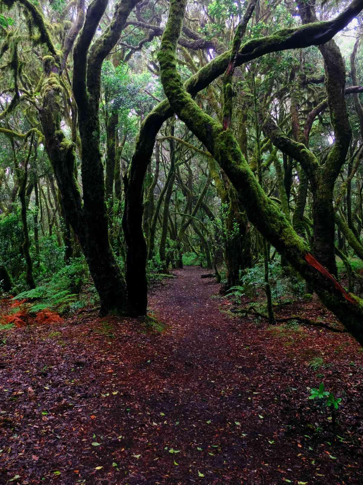 In den Nebelwald - Unheimliche Begleiter