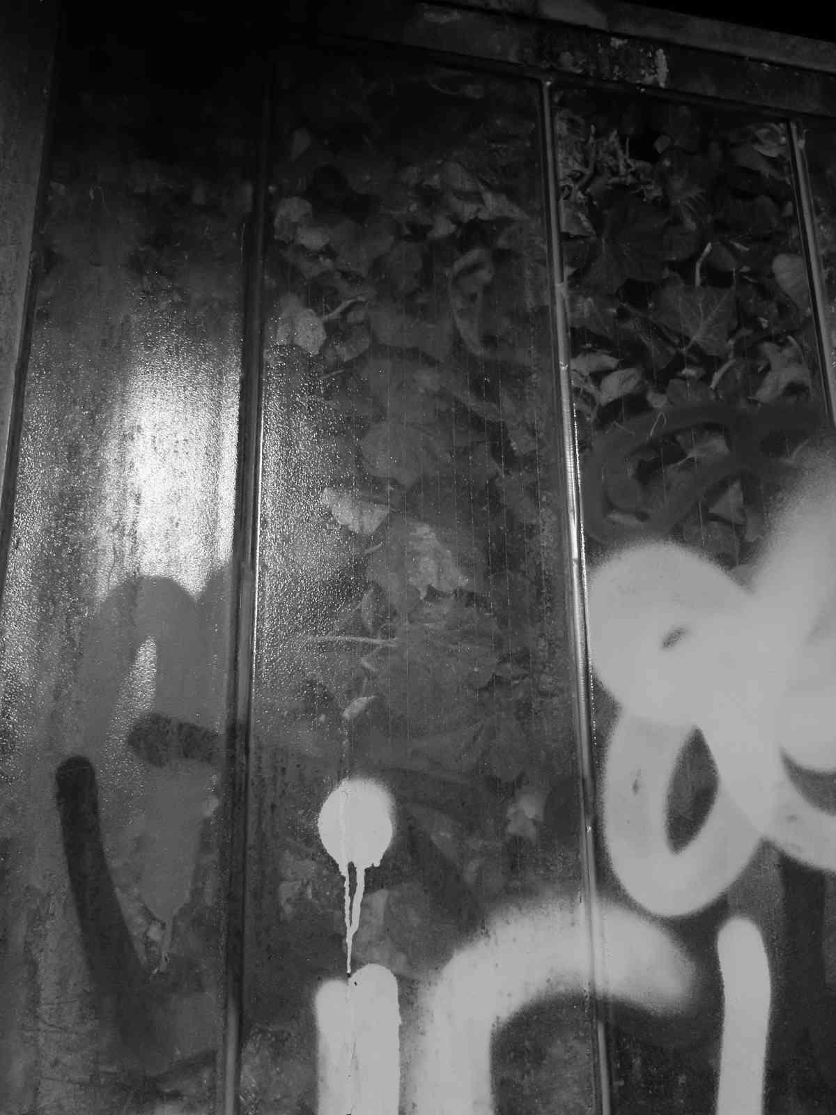 Tiergartentreppe - Alienpflanze