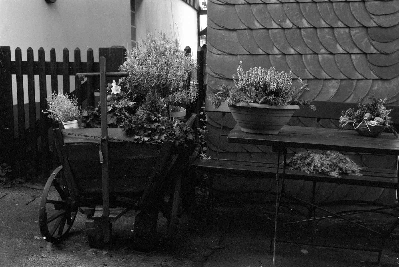 Fotowalk in Cronenberg - Blömkes