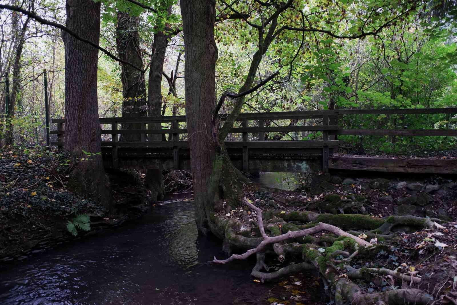 Brücke über die Düssel