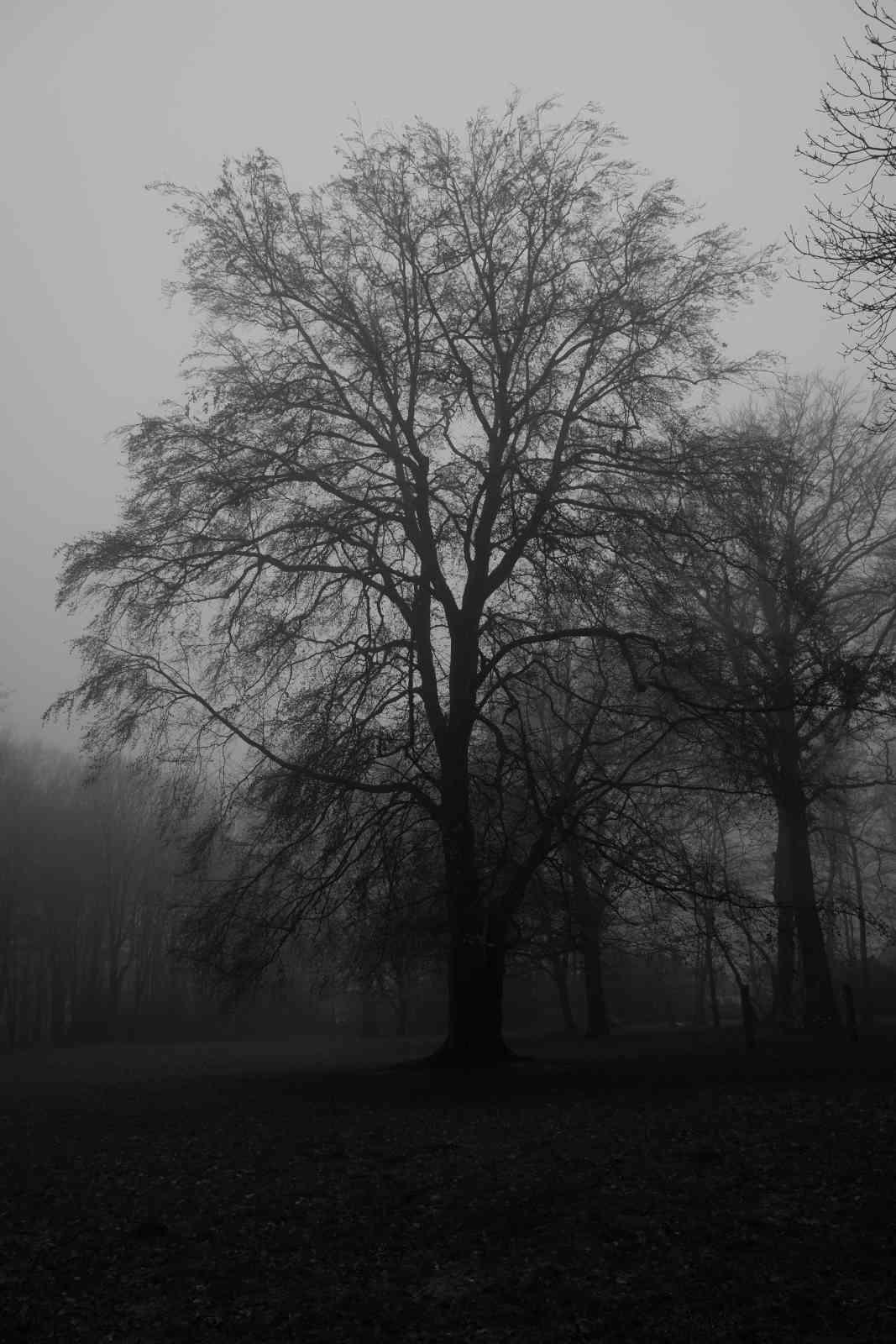 Im Nebel 02