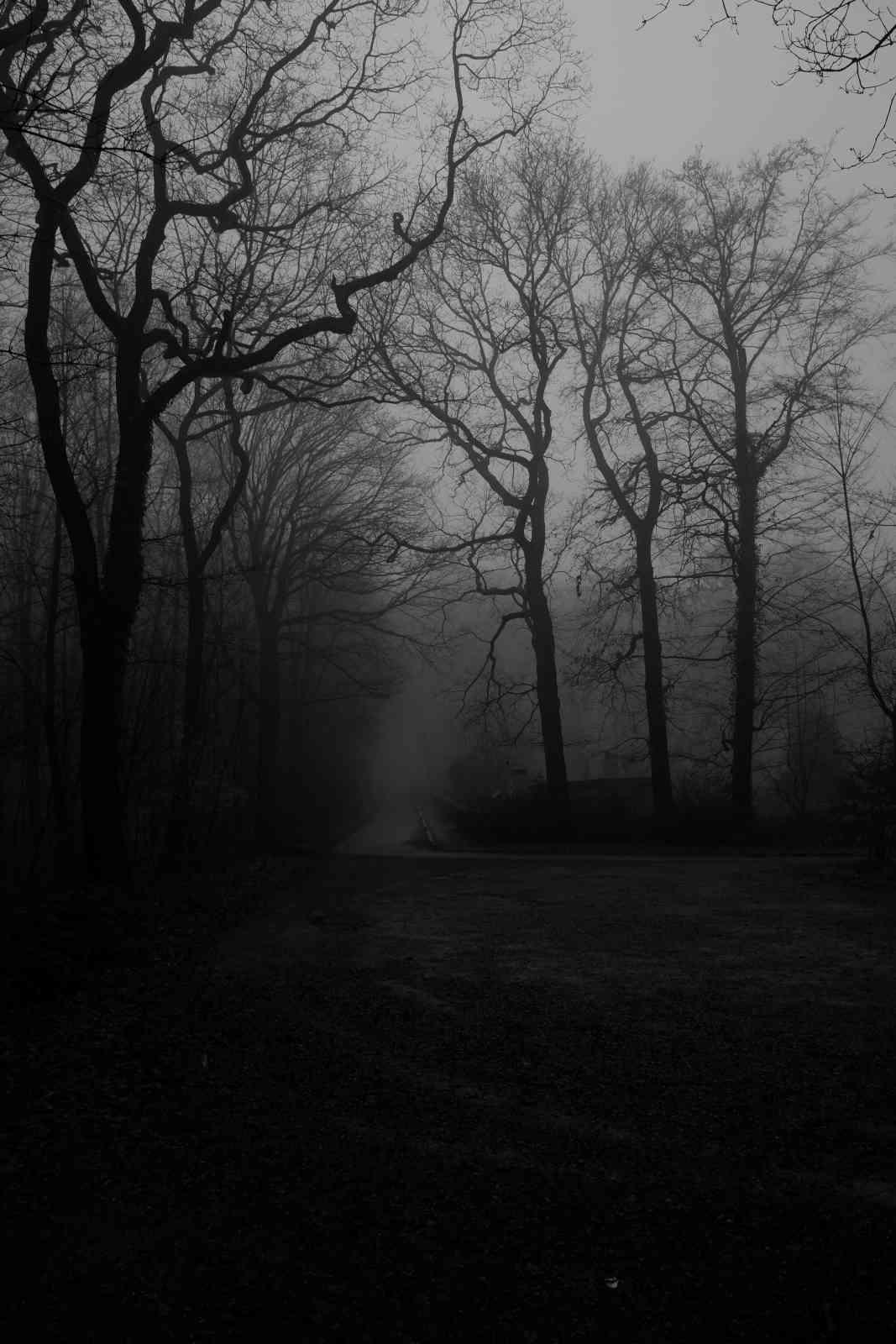 Im Nebel 06