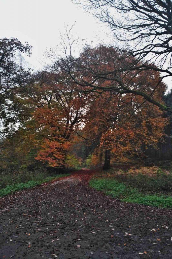 Der Herbst im Burgholz