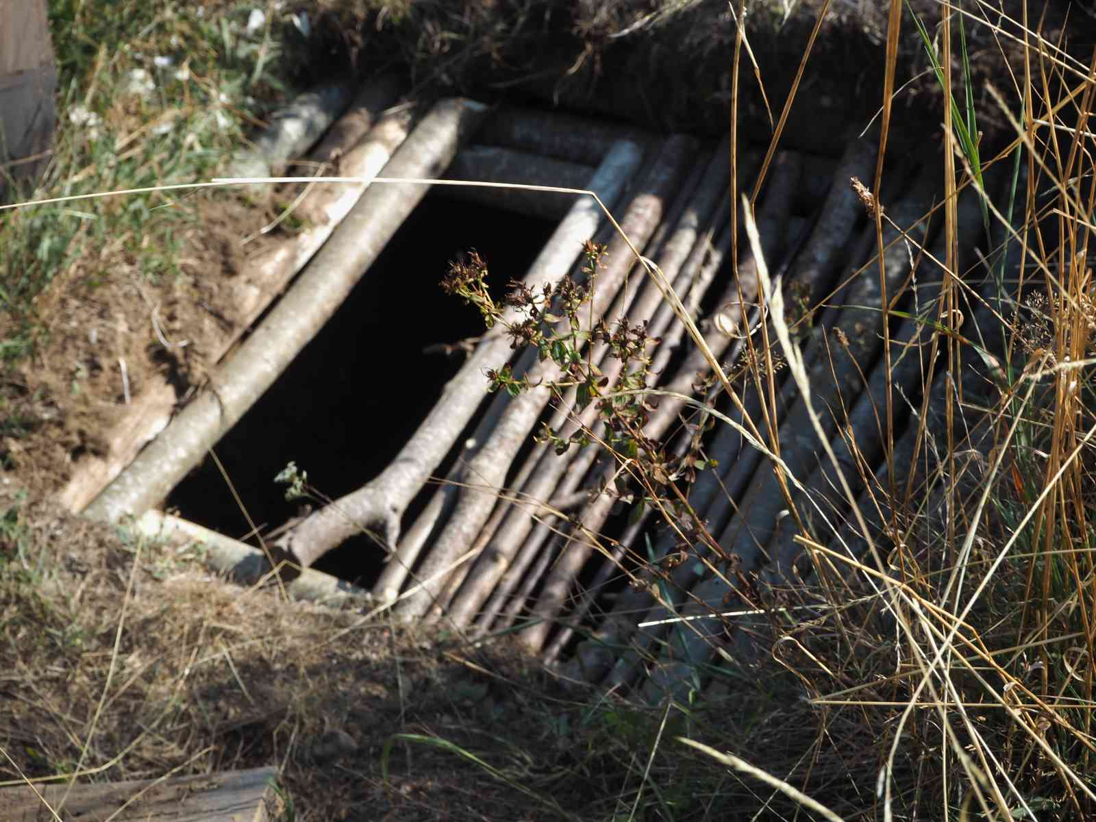 Kojote-Akademie - Scout-Pit