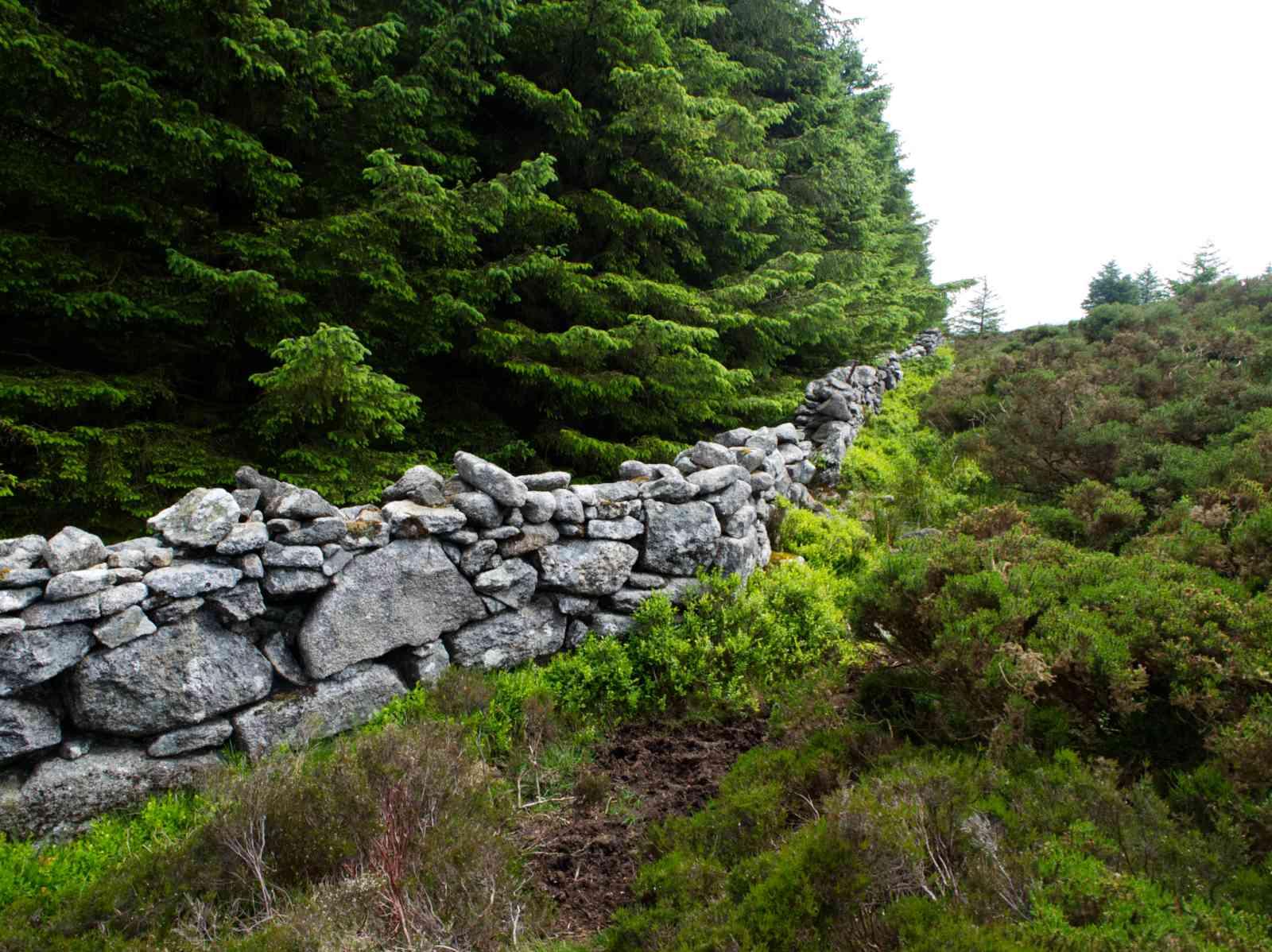 Prince William's Seat - Steinmauer
